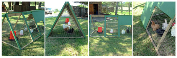 chicken tractor, chicken tractor for sale, nelspruit chicken tractor