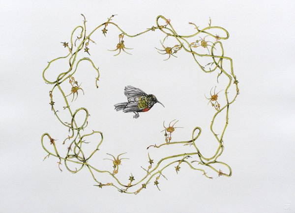hanneke bernade, hanneke bernade prints, hanneke bernade botanical art, lithographs